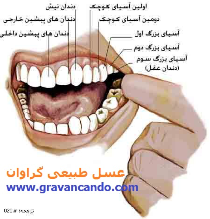 عسل و سلامت دندان ها
