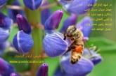 ایا عسل طبیعی با ساکارز صفر وجود دارد؟!