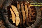 نکاتی مهم که قبل از خرید عسل طبیعی حتما باید بدانید؟