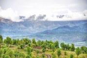چرا کیفیت عسل کردستان بالاتر است ؟!