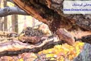 انواع عسل طبیعی کردستان که در کردستان تولید می شود؟