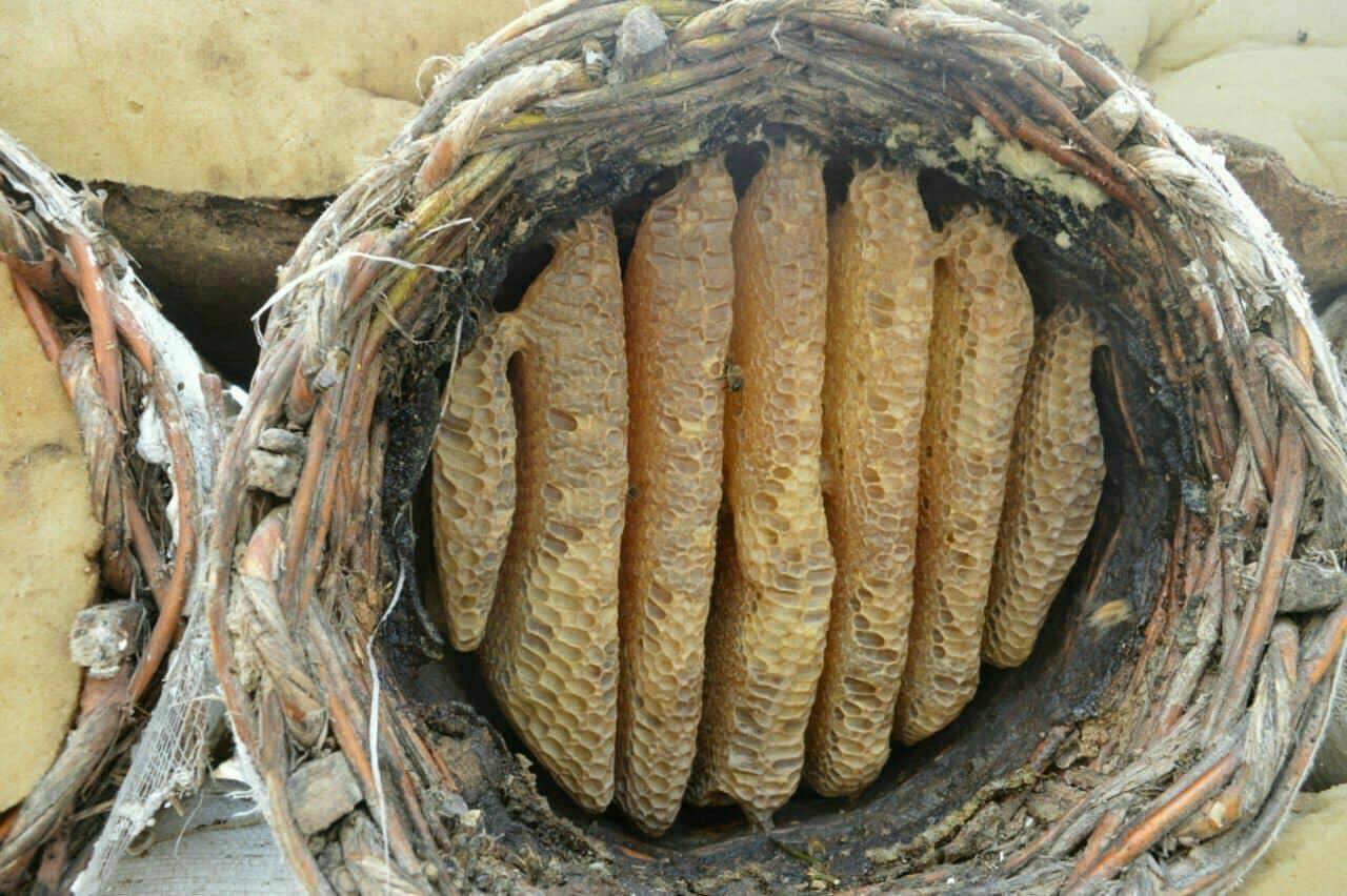 یکی از روشهای ارگانیک تولید عسل، تولید عسل به روش خودبافت (سبدی) است