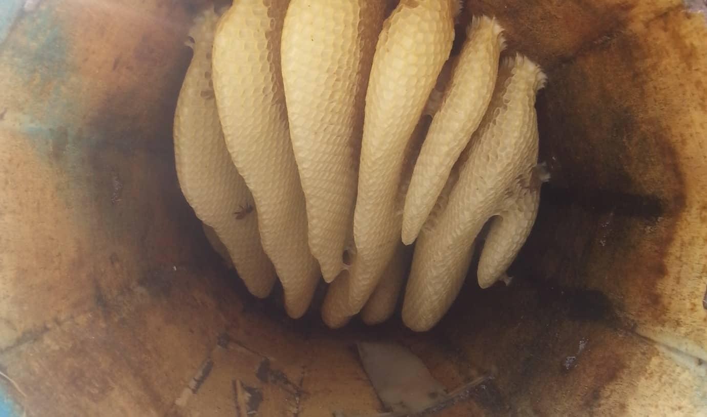 عسلهای خودبافت ارگانیک بوده و انسان هیچ دخالتی در زمان تولید آن ندارد