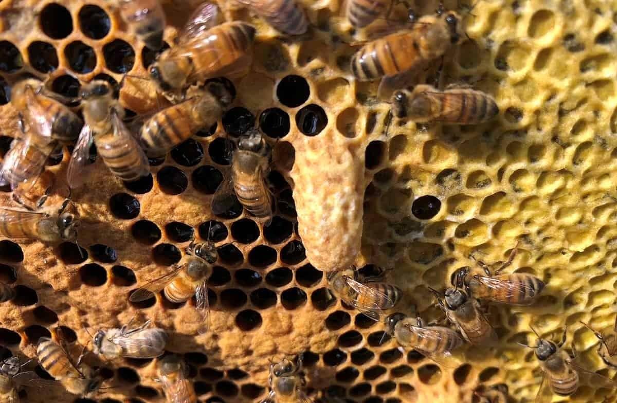 میزان ساکارز موجود در عسل باید کمتر از 5 درصد باشد
