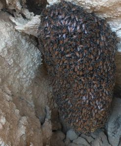 خرید عسل صخره