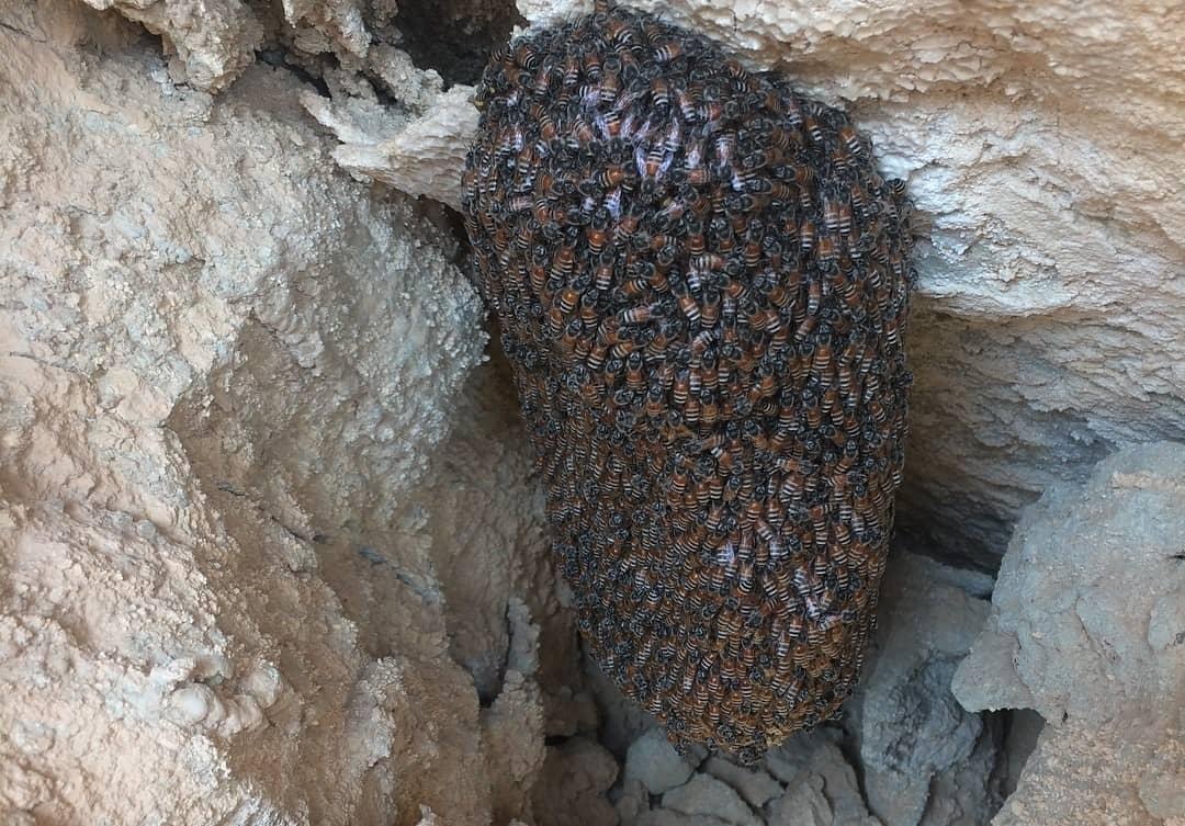 بهترین کار در تهیه عسل، خرید عسل ارگانیک از زنبوردار است